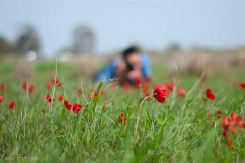 Flowers' sniper