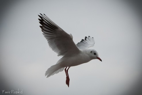 Landing Bird